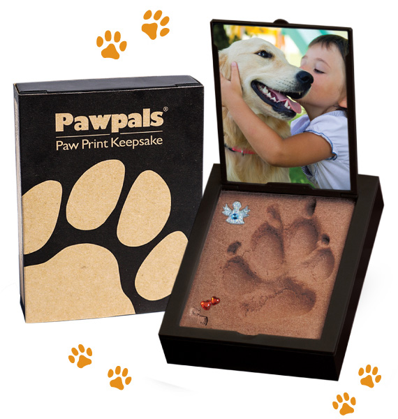 Paw Print Mold Kit No Kneading Mixing Baking Or Drying